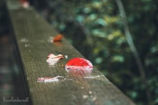 Great Swamp Wildlife Refuge red leaf on the railing