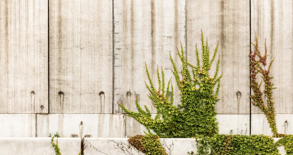 What I've Learned from Houseplants