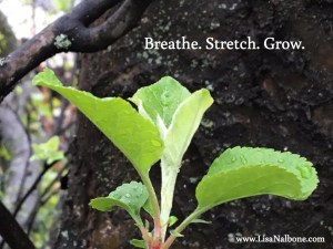 breathe-stretch-grow at www.lisanalbone.com