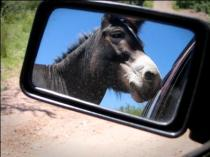 photo of donkey in mirror