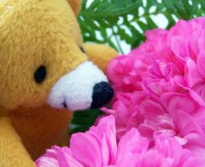 photo of Teddy Sniffing Flowers