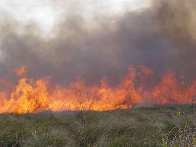 A cypress prairie burns during a early spring prescribed fire, public domain via Wikimedia Commons