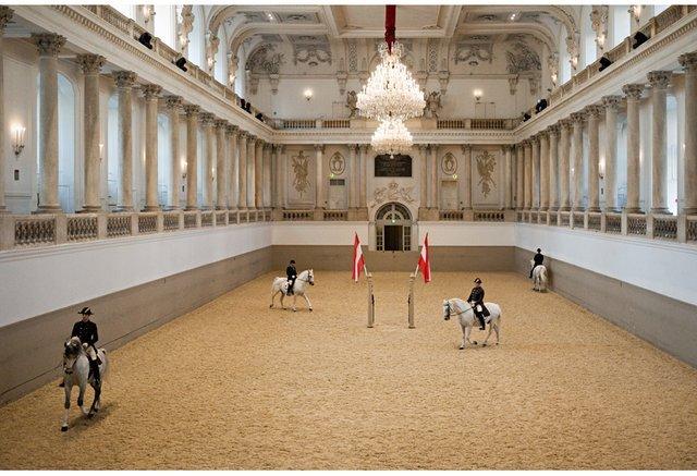 Lipizzaner Stallions, Vienna