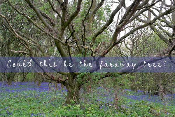 faraway-tree