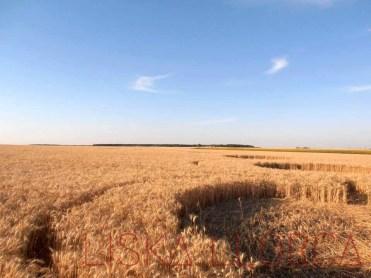 """Crop circle"" - 2011 - Selommes, France"