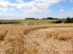 """Festival """"Le blé pousse"""" - 2012 - Selommes"""