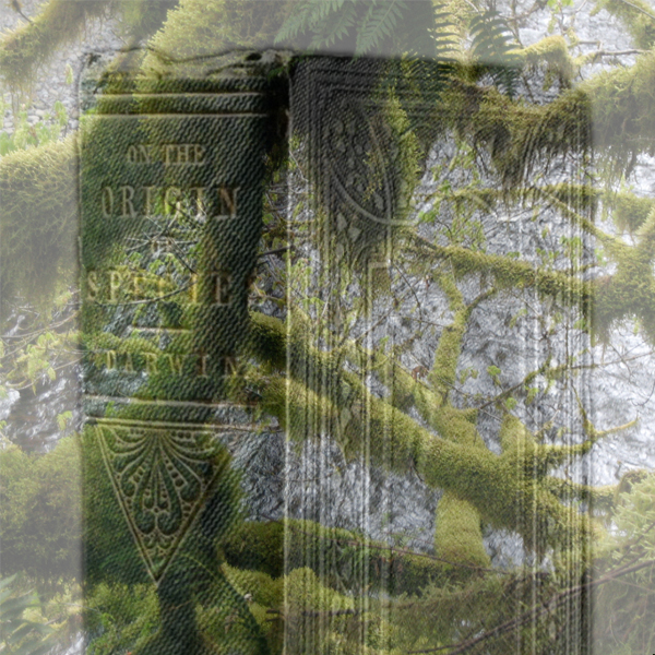 """Moss-strewn trees hover over a copy of Charles Darwin's """"On the Origin of Species"""""""