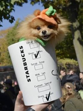 psl-dog
