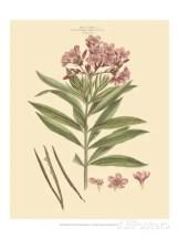 john-miller-johann-sebastien-mueller-blushing-pink-florals-iii