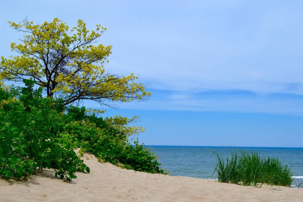 Indiana Sand Dunes, Kristin Urban