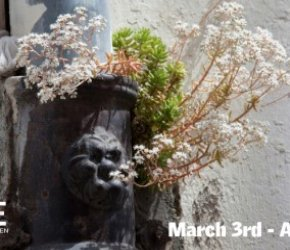 ART OPENING – Urban Nature: The Demand to be Seen