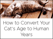 Recommendations convert years