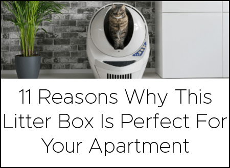 Where To Put The Litter Box In A Small