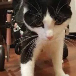 Wheelchair For Cats Steelcase Task Chair 5 Tips Caring A Disabled Cat Learn More On Litter Robot Blog