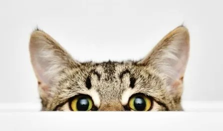 tabby cat folklore facts