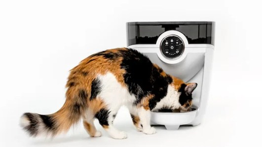 Calico cat eating from a white Feeder-Robot automatic cat feeder