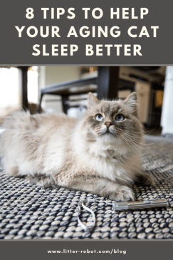 white Siberian cat on the floor with a laser pointer - 8 tips to help your aging cat sleep better
