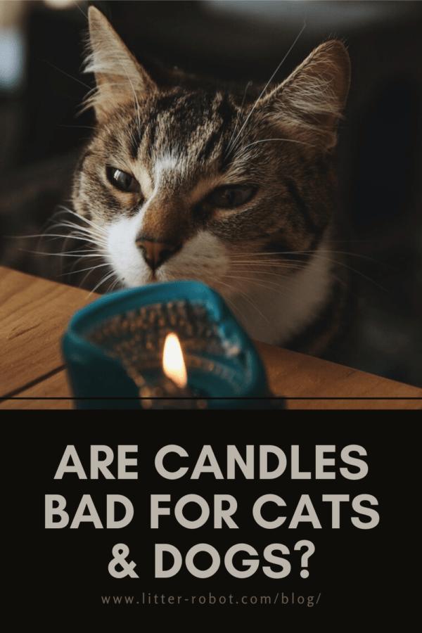 ¿Las velas son malas para perros y gatos?