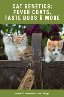 Orange, white, and grey kittens in a basket outside - cat genetics: fever coats, taste buds, and more