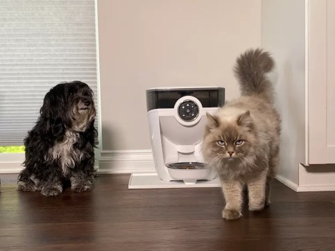 Havipoo dog and Siberian cat with a white Feeder-Robot automatic pet feeder