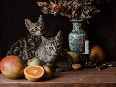 two brown tabby cats next to fruit and a vase of dried flowers - can cats taste sweetness?