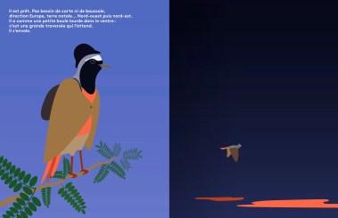 rouge-queue quatre histoires d'oiseaux
