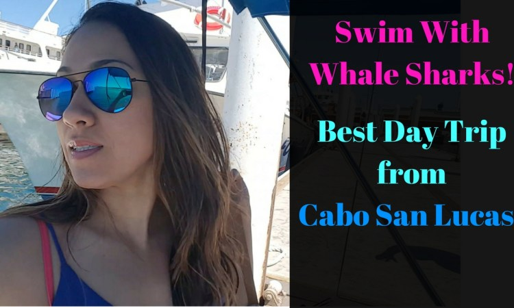 Swim With Whalesharks Just A Day Trip From Cabo San Lucas In La Paz Mexico! Once In a lifetime experience.