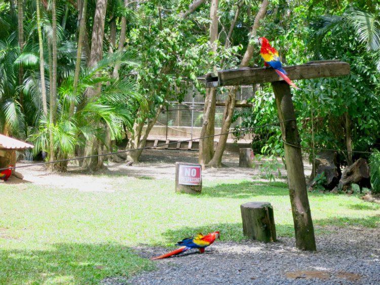 Macaws are Roatan's National Bird