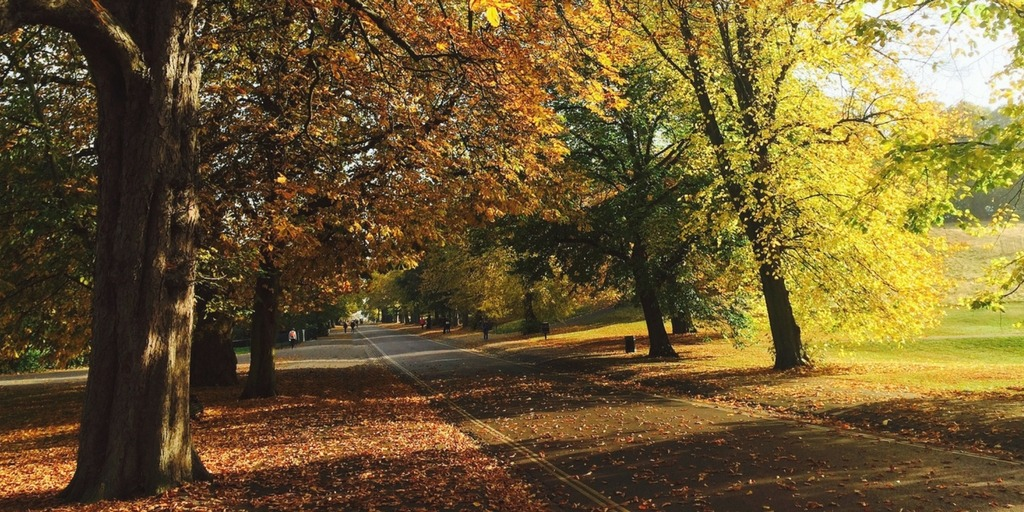 London Park in Autumn | Little City Trips guide to the best time to visit London with Kids