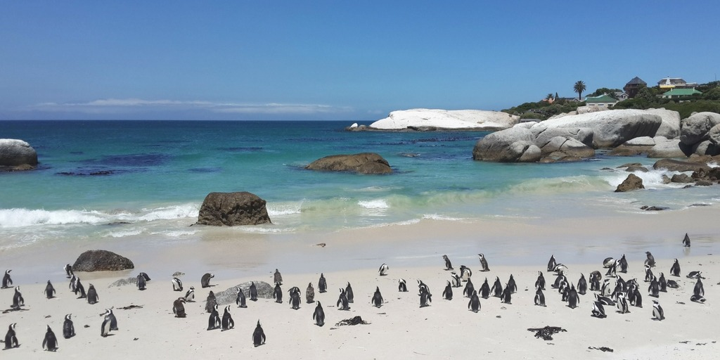 Boulders Beach Penguins things to do in Cape Town with Kids | Little City Trips - City Travel Experts