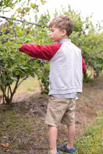 blueberry-picking-2206