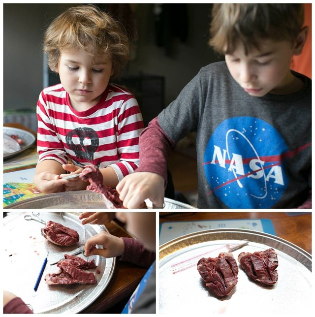 Dissecting a lamb heart for our Halloween Science party.