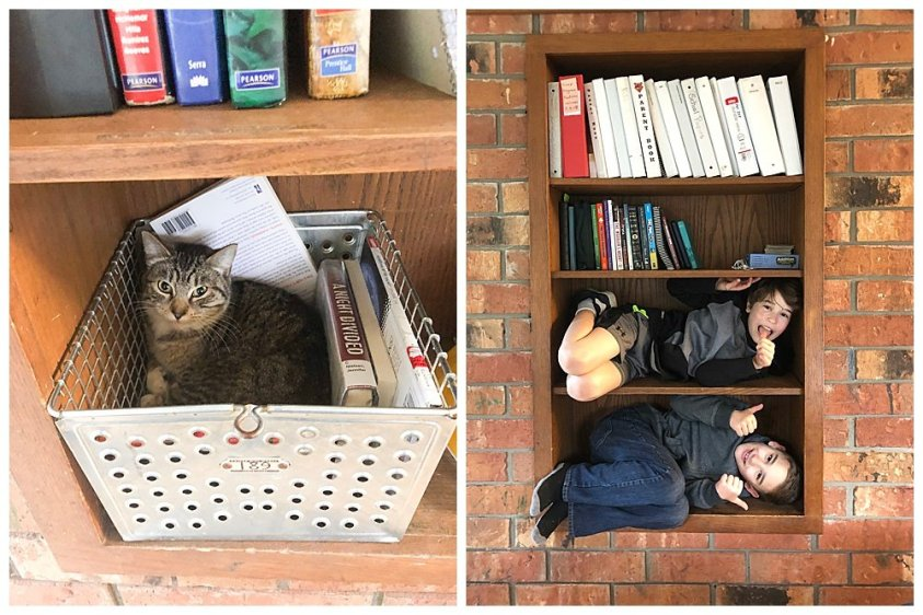 How to organize cats and boys.