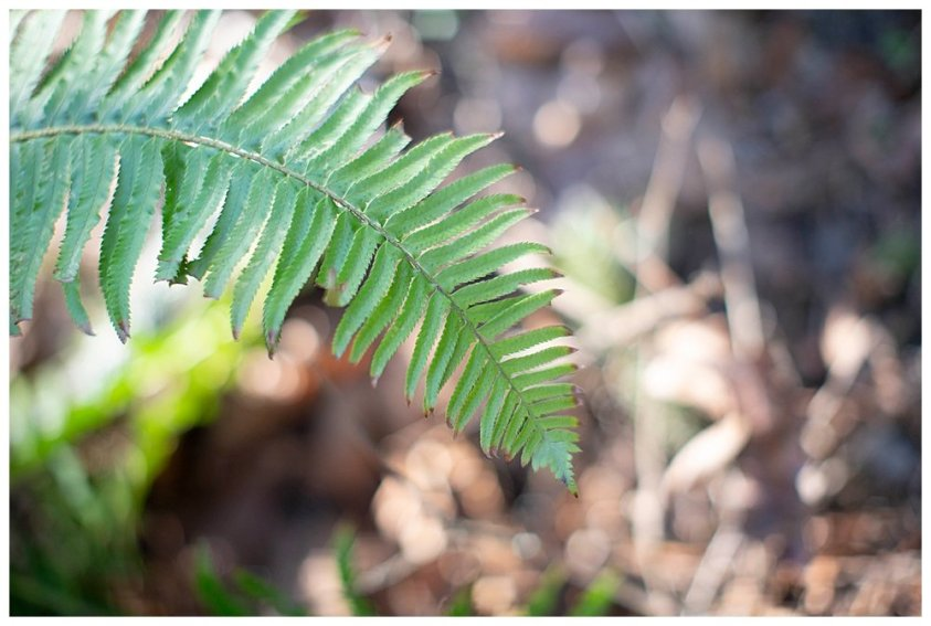 I love the ferns of the Pacific Northwest.