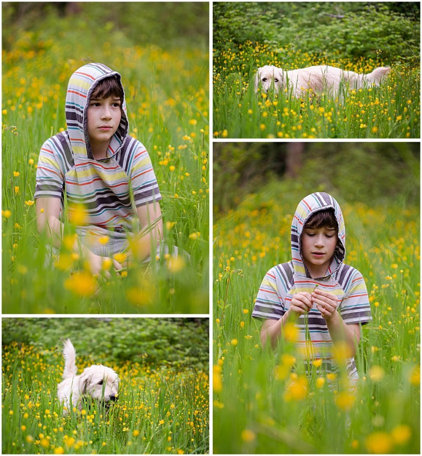 Apollo and Frodo in the buttercups.