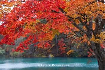 福島五色沼_Goshikinuma Lake,Fukushima