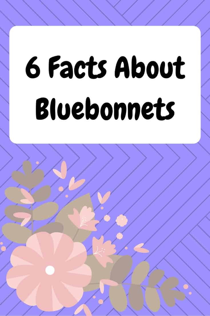 6 Facts About Bluebonnets (1)