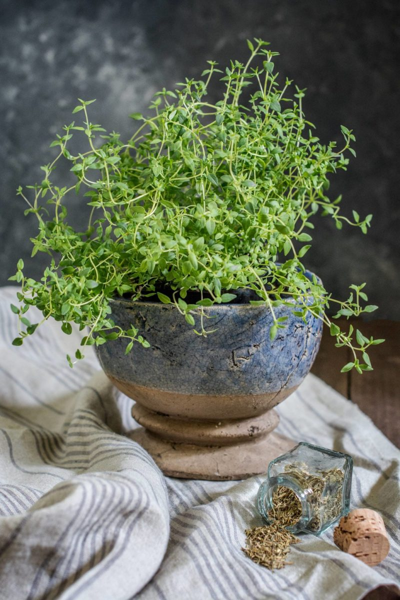 It's About Thyme, tips and ideas on how to use this delicate herb. Find recipes and more at Little Figgy Food.