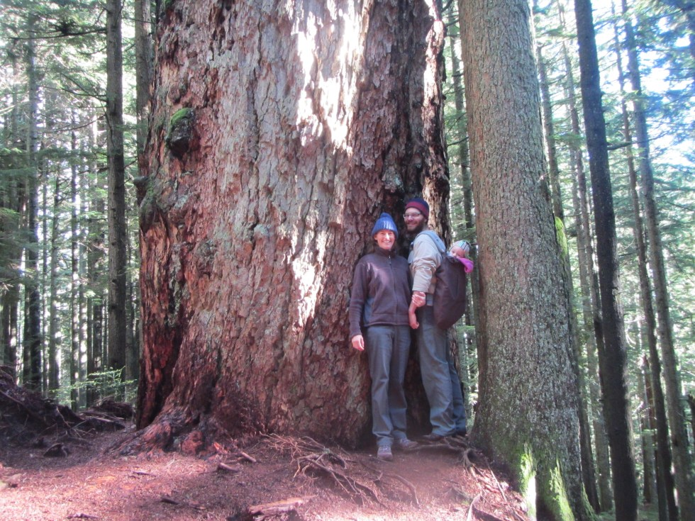 Large Douglas Fir on Lawson Creek Trail