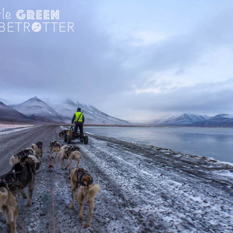 Dog-mushing-sled-svalbard-longyearbyen