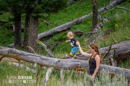 Climbing-trees-Yellowstone_national-Park copy