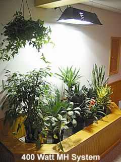 Selecting Grow Lights for Indoor Living Wall Applications