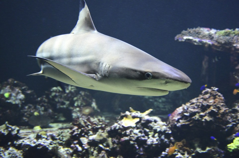Sharkwater Extinction: an Action-Packed Film With a Powerful Message
