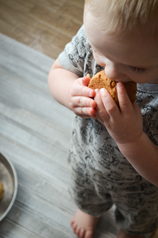 A toddler enjoys a big bite of Apple Walnut Sourdough Discard Muffin.