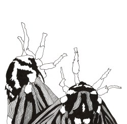 Moths - Pen & Ink