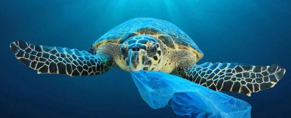 Plastic Free Packaging