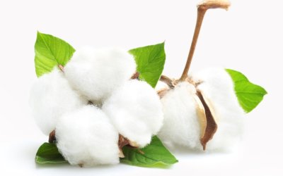 Why is Organic Cotton Better?