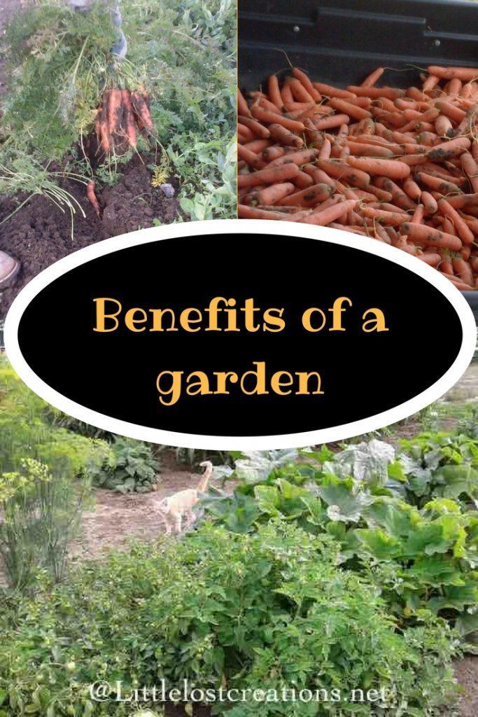 Benefits of a garden, carrots in a cart, digging carrots, gardening