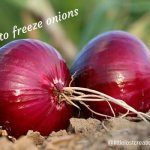 2 red onions laying in the soil. How to freeze onions