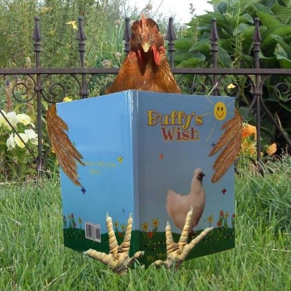 Chicken reading Buffy's Wish